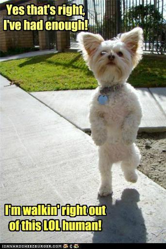 Bye Dog Meme : Hotdog, Funny, Pictures, Memes, Puppy, Cheezburger