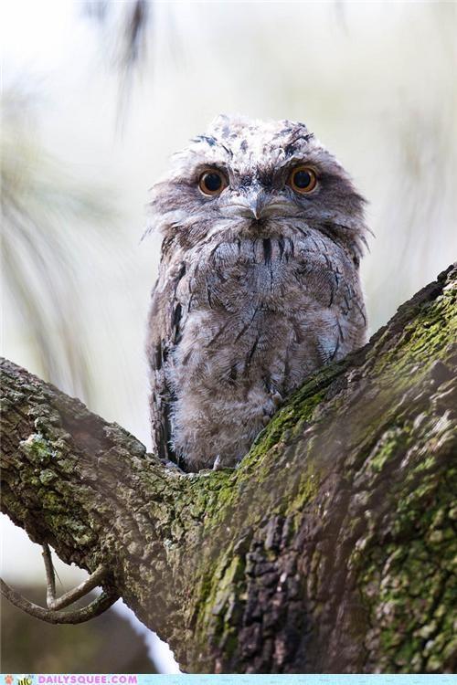 Creepy Baby Owls : creepy, Cheezburger?, Comparison, Funny, Animals, Online, Cheezburger