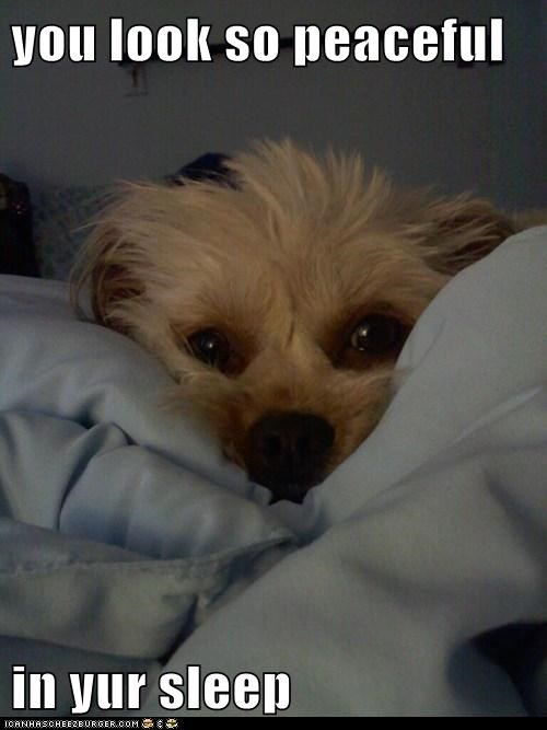 Good Morning Dog Funny : morning, funny, Hotdog, Morning, Sunshine, Funny, Pictures, Memes, Puppy, Cheezburger