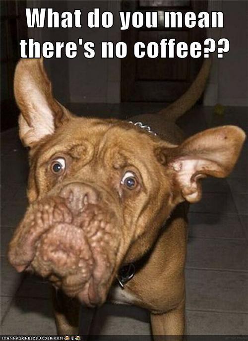 No Coffee Meme : coffee, Hotdog, Coffee, Funny, Pictures, Memes, Puppy, Cheezburger