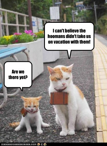 Cat Vacation Lolcats Lol Cat Memes Funny Cats Funny Cat Pictures With Words On Them Funny Pictures Lol Cat Memes Lol Cats