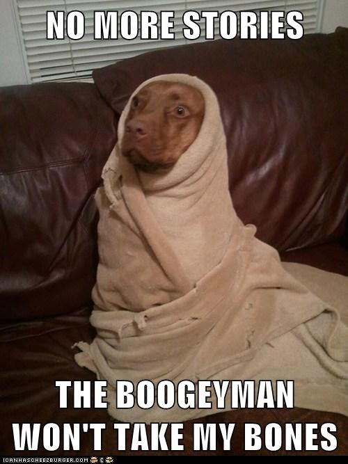 Dog Wrapped In Blanket Meme : wrapped, blanket, Hotdog, Blanket, Funny, Pictures, Memes, Puppy, Cheezburger
