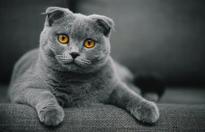 top ten cutest cat
