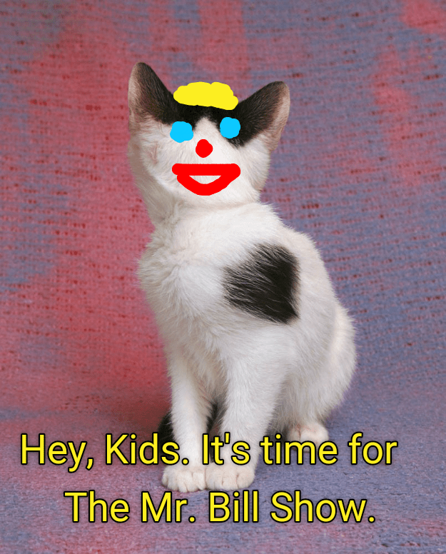 Cat Memes For Kids : memes, Lolcats, Funny, Memes, Pictures, Words