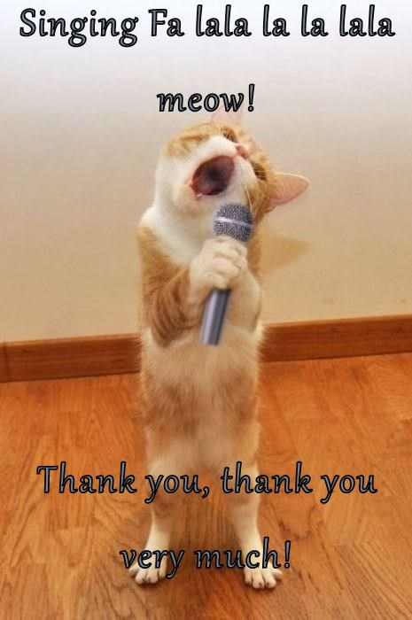 Thank You Cat Meme : thank, Thank, Much!, Lolcats, Memes, Funny, Pictures, Words