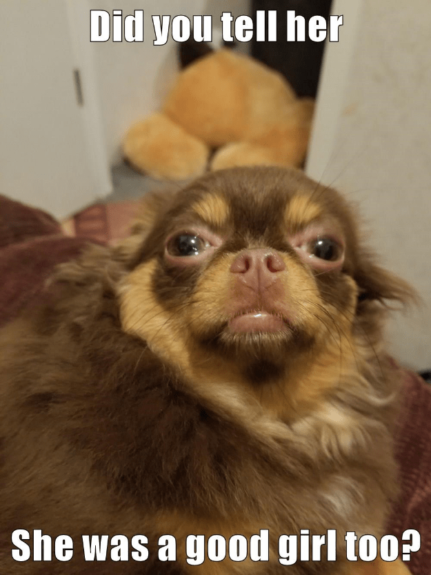 When The Dogs Begin To Smell Her : begin, smell, Smell, Clothes..., Hotdog, Pictures, Funny, Memes, Puppy