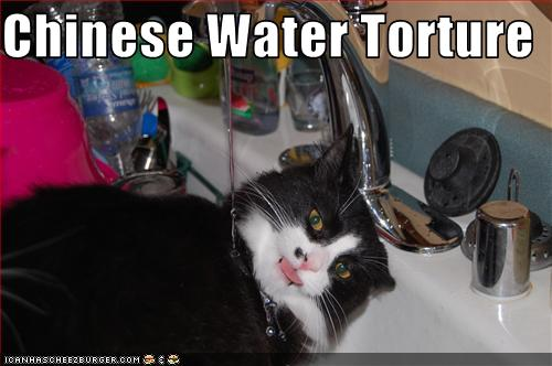 Chinese Water Torture  Cheezburger  Funny Memes  Funny