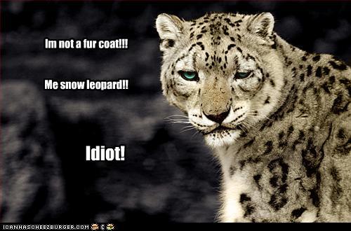 Im Not A Fur Coat Me Snow Leopard Cheezburger Funny Memes Funny Pictures
