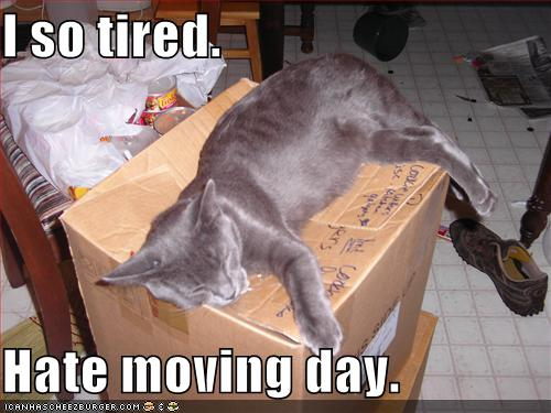 I so tired Hate moving day  Cheezburger  Funny Memes