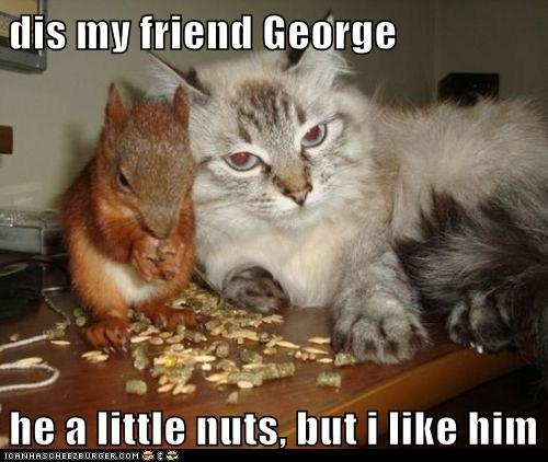 Cat Funny Online Cartoons