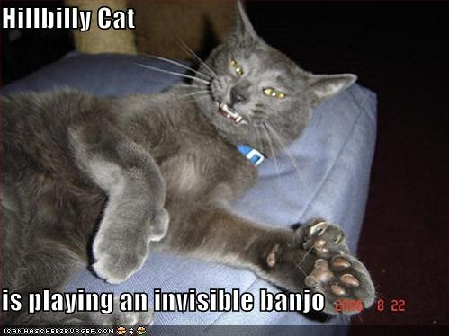 Cute And Funny Cat Wallpaper Hillbilly Cat Is Playing An Invisible Banjo Cheezburger