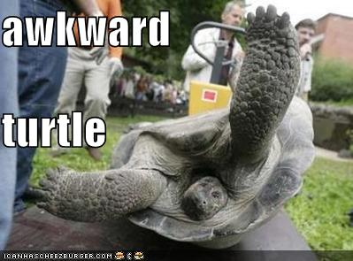 Awkward Turtle Cheezburger Funny Memes Funny Pictures