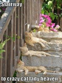 Stairway to crazy cat lady heaven - I Can Has Cheezburger ...