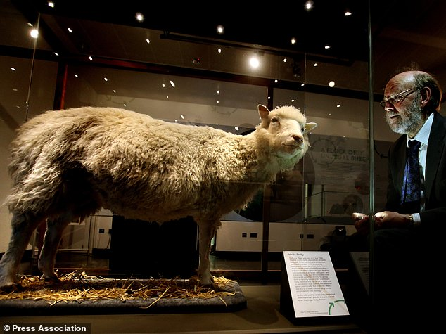 Since her death in 2003, Dolly has been exhibited at the National Museum of Scotland in Edinburgh. Although she died 14 years ago, four identical clones of her still live