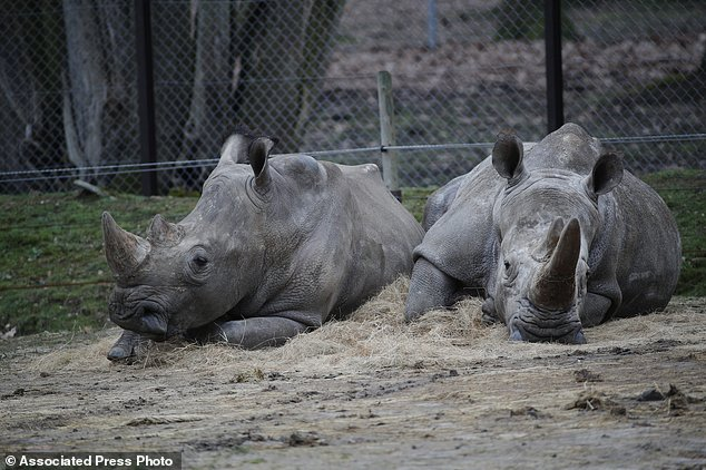 Attack On Rhinoceros In Paris Puts Zoo Security In