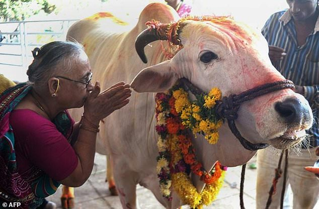 Cows are revered in the Hindu scriptures as the 'mother' of civilisation