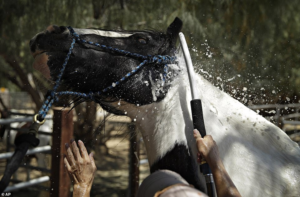 Above Lori Mantz sprays water to cool down her horse Thor on Monday in Las Vegas. The heat wave brought broiling temperatures that were also felt in Arizona and Southern California, creating a public health hazard