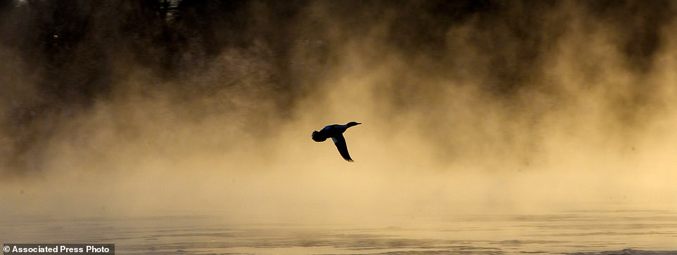 A duck flies over small patches of ice and rising steam from the Mississippi River on Tuesday near Heim's Mill in St. Cloud, Minnesota