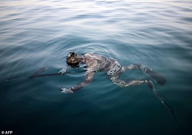 Several times a year, as egg-laying approaches for different species, the freedivers invite fishermen to awareness sessions about preserving Lebanon's underwater wildlife