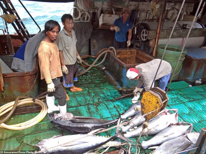 Sea To Table has access to a large group migrant fishermen, meaning they offer low pay of just $1.50 a day for 22 hours in some cases. Fishermen at the Majuro port in the Marshall Islands unload yellowfin tuna