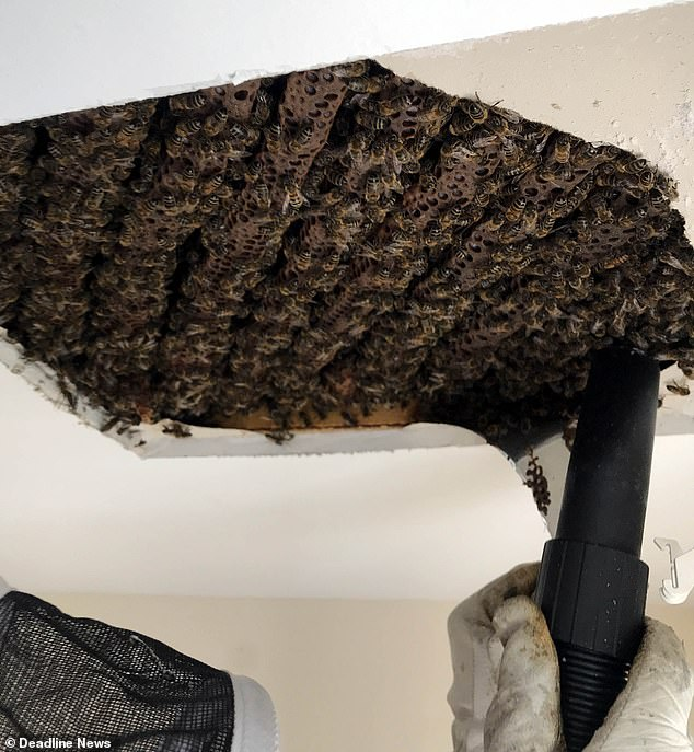 bees removed from a