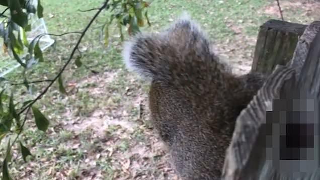 Its Squirrel Nuts Stuck Tree