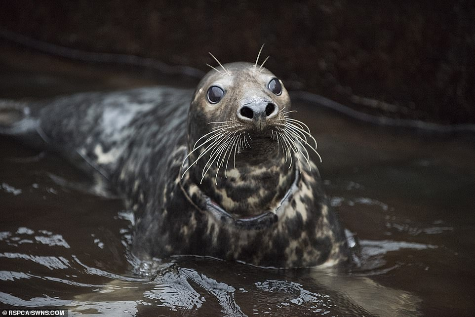 Images depict animals with plastic rings around their necks, sometimes cutting into the hustle and bustle of their bodies and hindering creatures' ability to move and hunt