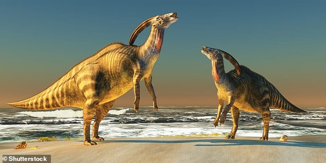 Pictured is the impression of an artist of a Parasaurolophus, one of the species studied in the new study. Different duck-billed dinosaurs may have produced different notes because, according to a new study, their heads were shaped differently