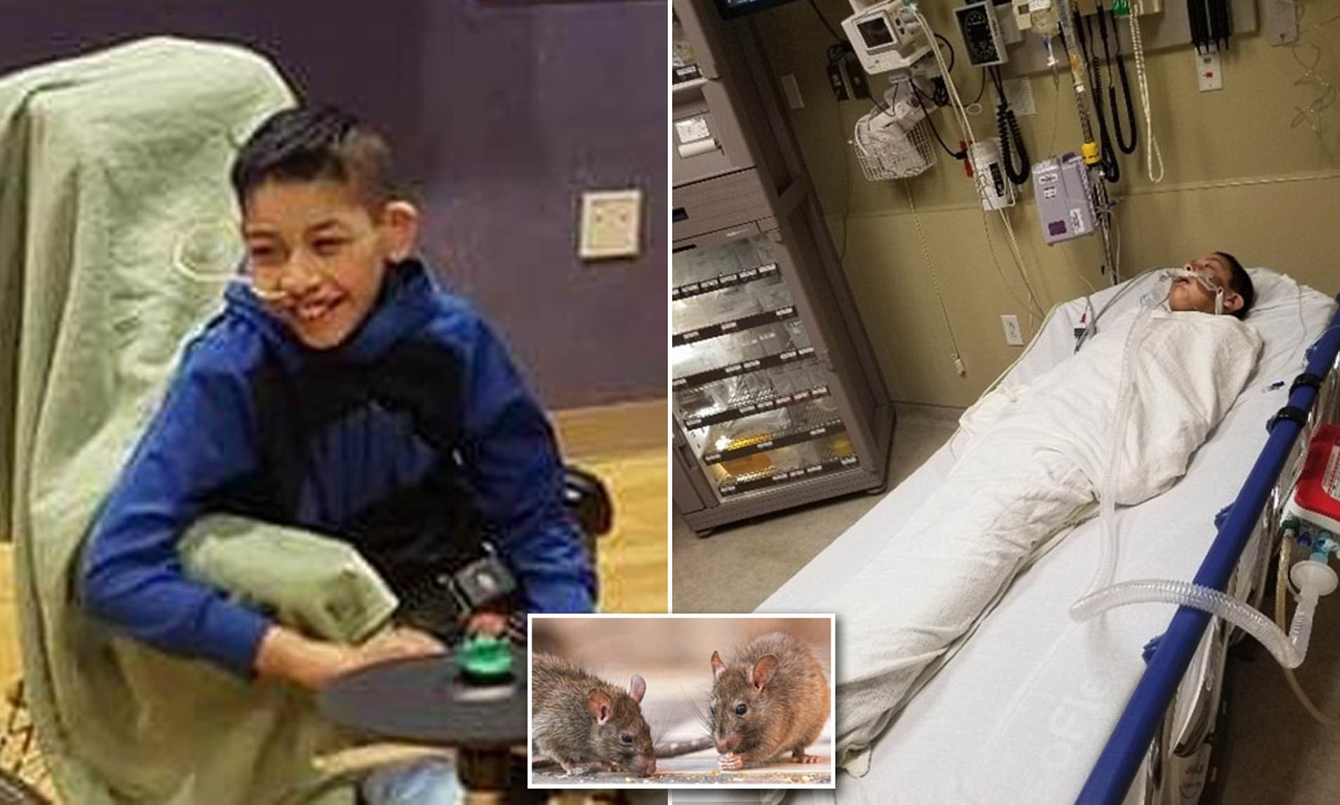New Mexico boy, 9, dies after contracting deadly RAT disease that ...