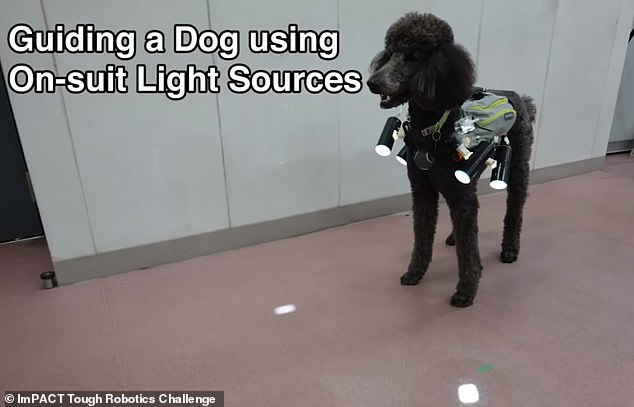 "A YouTube-approved video shows exactly how the new system works. the dog (in this case a poodle) is equipped with a vest that has ""suitable light sources"" that shine on the ground in the direction it should go"
