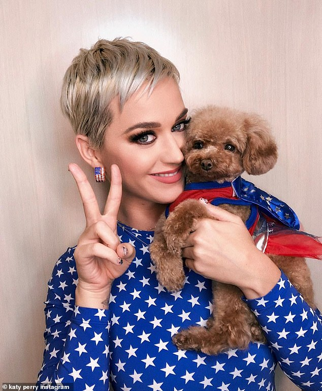 Image result for katy perry dog