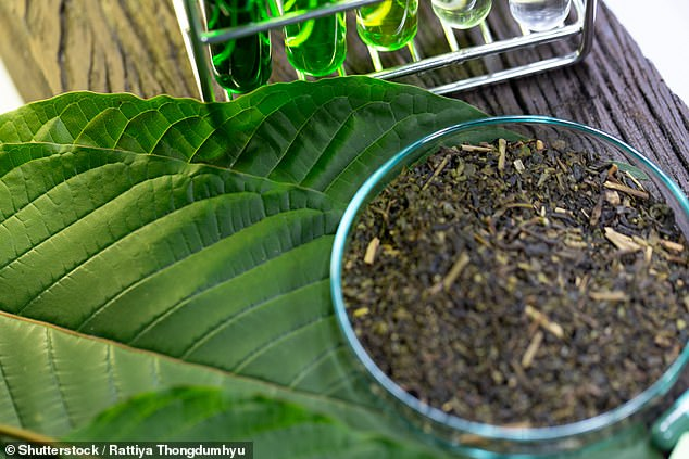 Kratom has gained popularity in the United States as an unapproved herbal supplement for the treatment of opioid withdrawal. The controversial use of a mother in Florida has given her samples to newborns