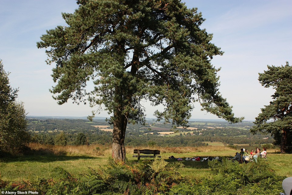 The picturesque Ashdown Forest in Sussex, which is the real-life place author AA Milne used as inspiration for his Winnie the Pooh story locations