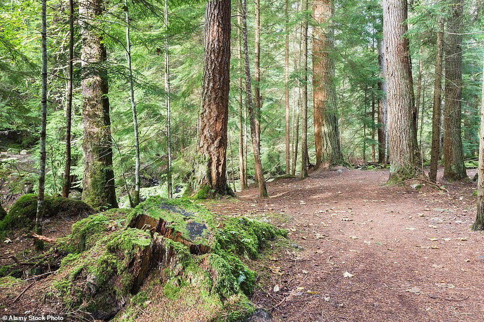 The description of the enchanted wood in Enid Blyton's The Faraway Tree book series is very similar to that of Reelig Glen, near Inverness in Scotland