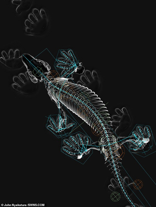 The digital scans were made possible by combining the fossil record with the advancement of four species of amphibians and reptiles to get an idea of the nuances of the animal's joints.
