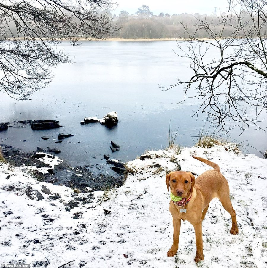 Rona Hamilton pictured Bracken the Labrador in the snow at Mugdock Loch in Stirlingshire