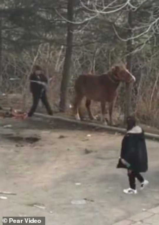 A man was caught tying his horse to a tree and beating it at a tourist attraction in east China , sparking accusations of animal abuse