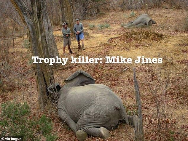 Jines also said that the animals were shot in full compliance with laws and regulations in both Zimbabwe and the US