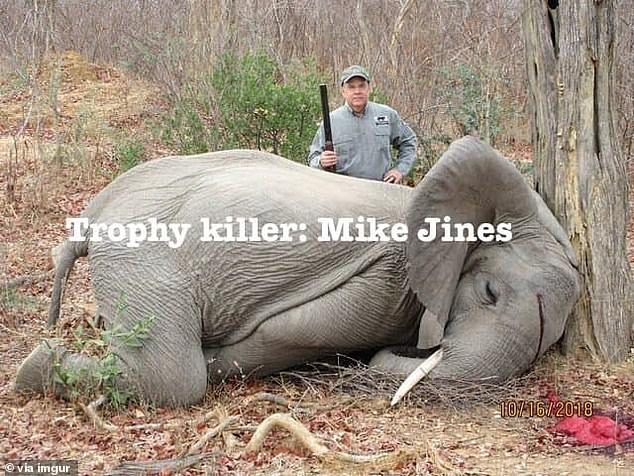 Thousands of social media users have accused Jines and professional hunter, Max 'Buzz' Delezenne, of killing two baby elephants on an African 'trophy' hunt in Zimbabwe