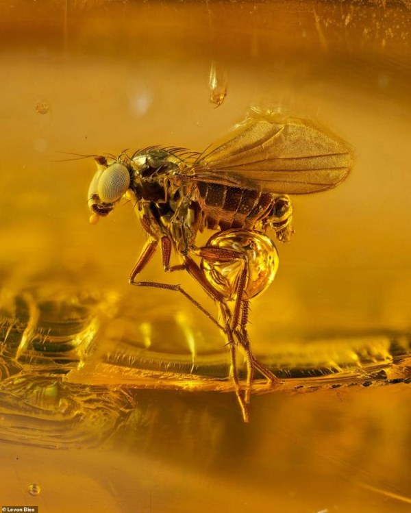 Beautiful Reveal Ancient Insects Preserved In Amber