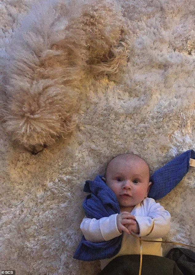 Peach, a two-year-old Poodle cross Bichon Frise lounges on the family's rug with her new Best friend, baby Lou. Peach came in seventh place in the SCS competition