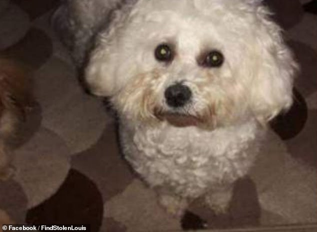 Louis was returned safely to his owner after the stalker unwittingly gave away the location of the pet by sharing a picture that showed his carpet (pictured)