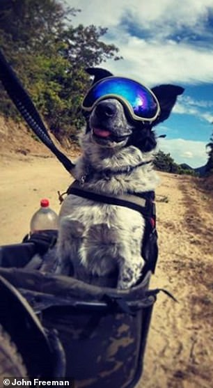 Stamina: He advises anyone thinking about bikepacking with a dog to keep in mind their pup's stamina, as he says he doesn't push Mira past 15 miles per day, as that is her physical limit