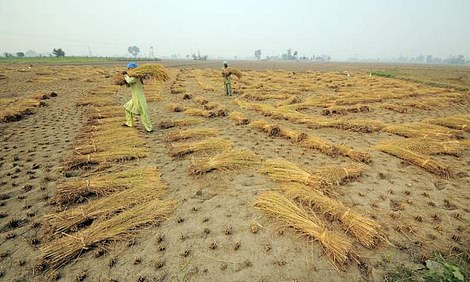 By 2040, up to 14% of land dedicated to wheat, maize, rice and soy will be permanently drier than in 1986-2005 while 31% will be wetter, according to the research. File photo