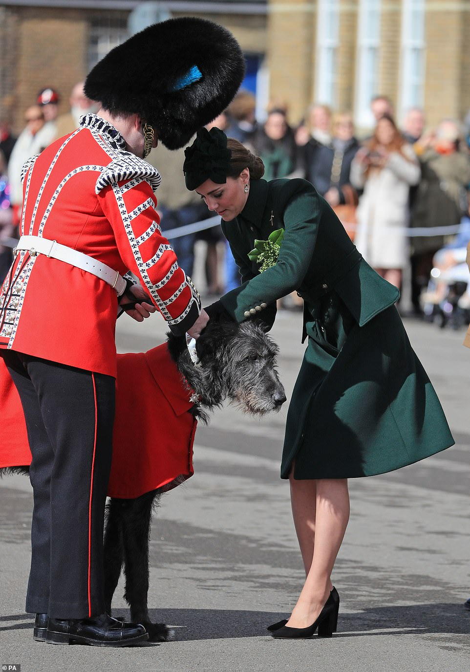 Kate pins a traditional sprig of shamrock. to the pooch's coat. Domhnall, which is Gaelic for 'world leader', traditionally leads 350 soldiers as they march on the Parade Square at Cavalry Barracks on Sunday morning