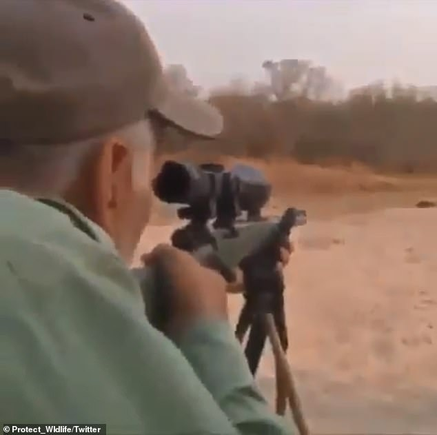 In the video, the hunter fires one shot, and awakens the unsuspecting lion to meet its demise