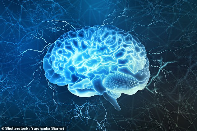 The hippocampus, or memory centre of the brain, shrinks as we age, helping to cause forgetfulness (stock)