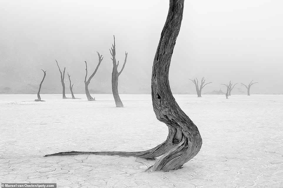 A striking black-and-white shot of theDeadvlei white clay pan located near the famous salt pan of Sossusvlei, inside the Namib-Naukluft Park in Namibia