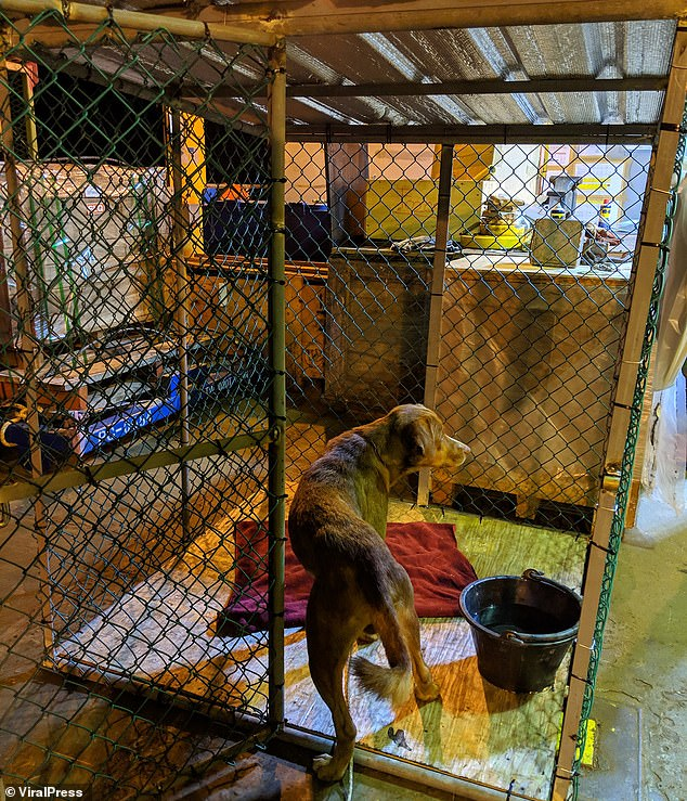 The dog, which was not given a name, looks at its new temporary home in a cage on the rig