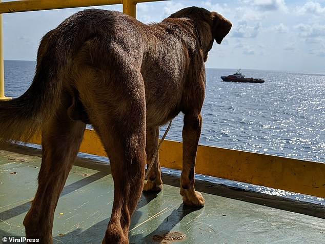 She looks out from the oil rig deck over the vast Gulf of Thailand sea that she was found swimming in